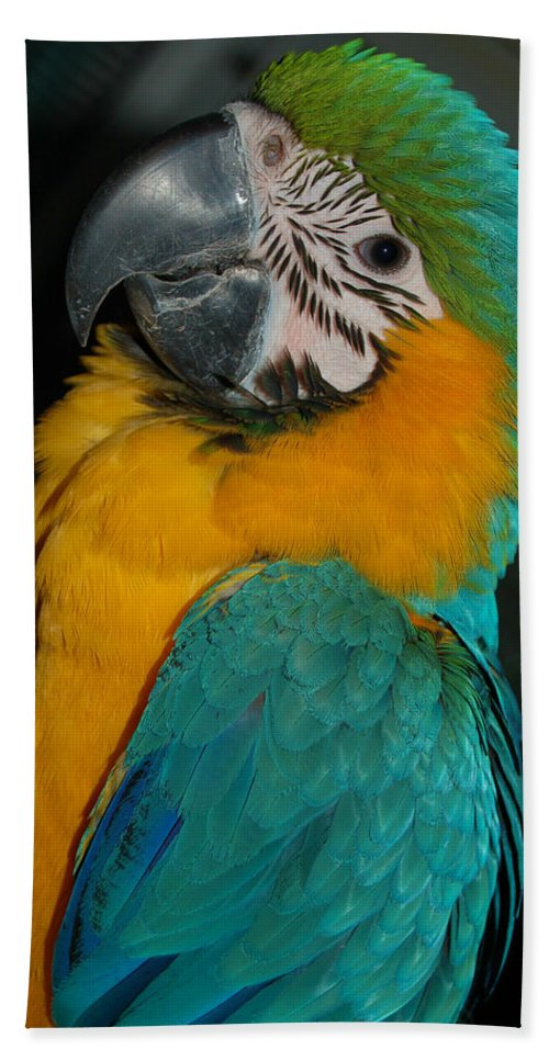 Blue Bath Sheet featuring the photograph Tango, The Blue And Gold Macaw by David Anderson