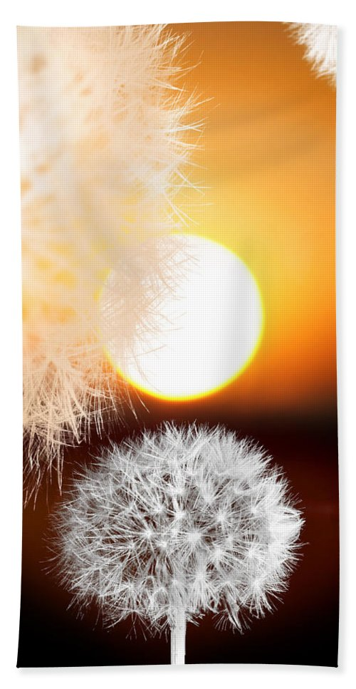 Taraxacum Bath Sheet featuring the photograph Taraxacum Sunset by Mal Bray