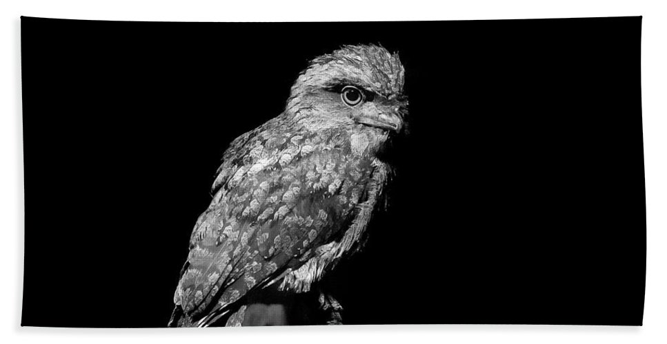 Tawny Frogmouth Bath Sheet featuring the photograph Tawny Frogmouth In Black And White by Miroslava Jurcik