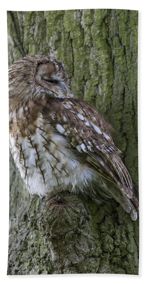 Bird Bath Sheet featuring the photograph Tawny Owl by Chris Smith