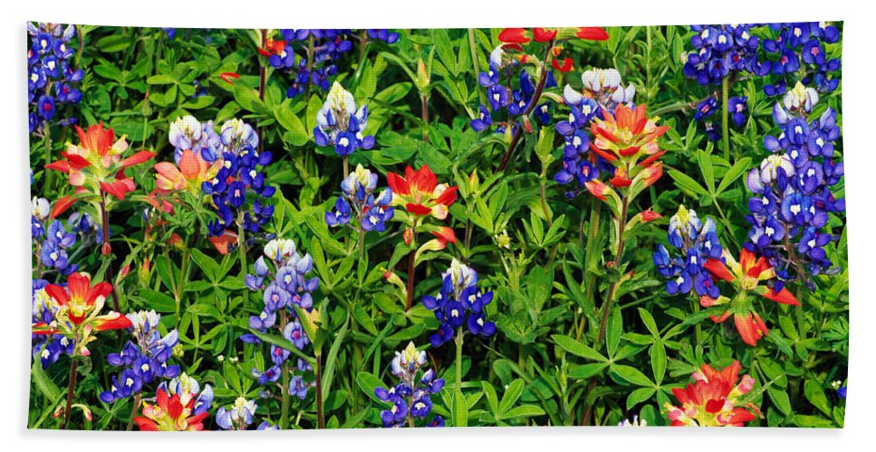 Photography Bath Sheet featuring the photograph Texas Bluebonnets And Indian Paintbrush by Panoramic Images