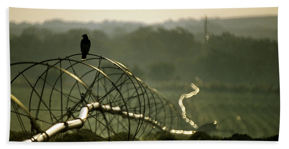 Hawk Bath Sheet featuring the photograph Texas Hawk by Jerry McElroy