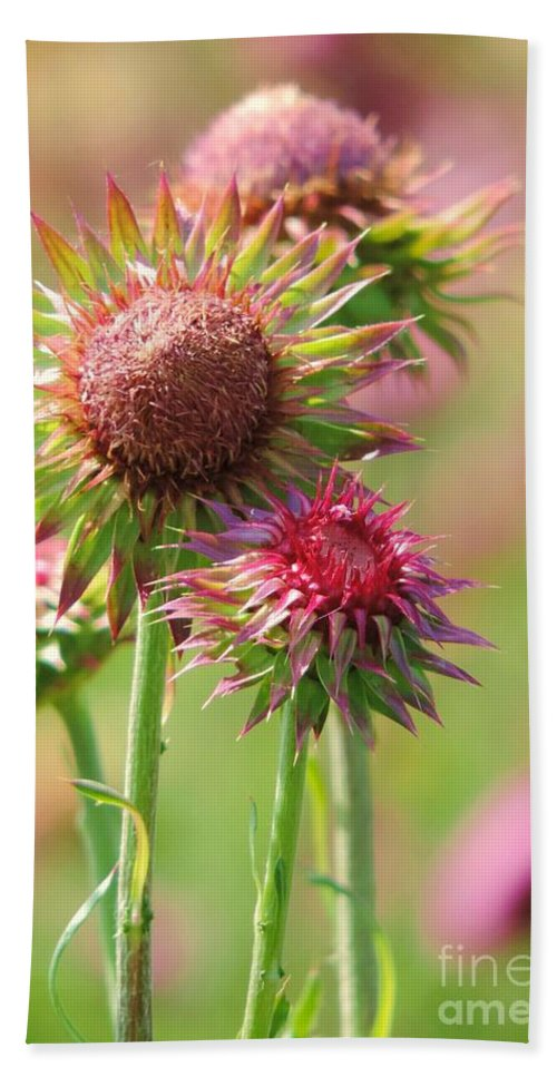 Texas Thistle Bath Sheet featuring the photograph Texas Thistle 001 by Robert ONeil