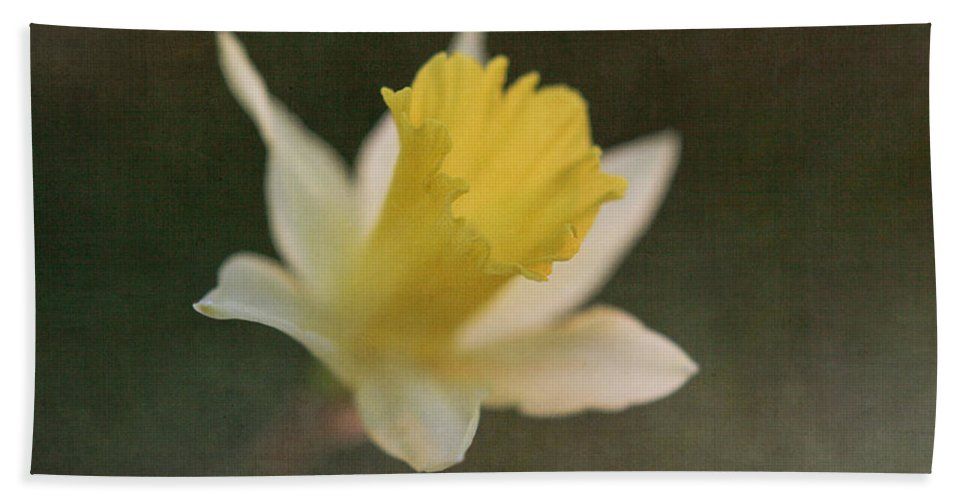 Daffodils Bath Sheet featuring the photograph Textured Daffodil by Mechala Matthews