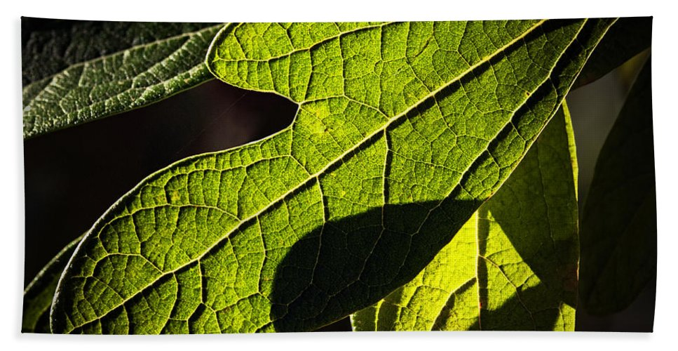 Leaf Hand Towel featuring the photograph Textured Glow by Christopher Holmes
