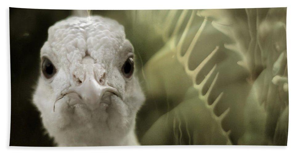 Peacock Bath Towel featuring the photograph Th White Peacock by Angel Tarantella