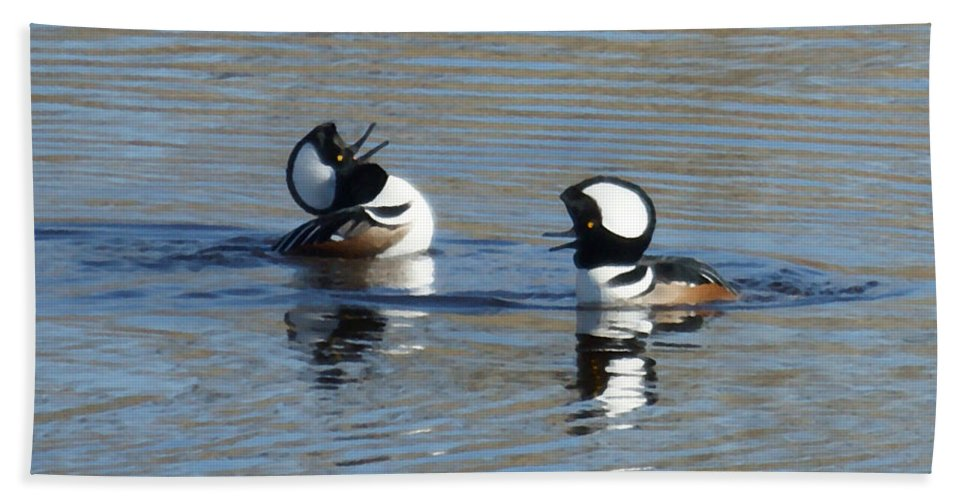 Hooded Merganser Hand Towel featuring the photograph Thats Funny by Ernie Echols