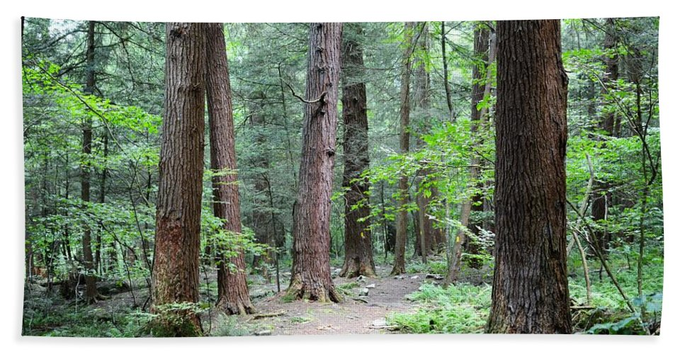 Hemlock Bath Sheet featuring the photograph The Ancient Hemlock Forest by Shelley Smith