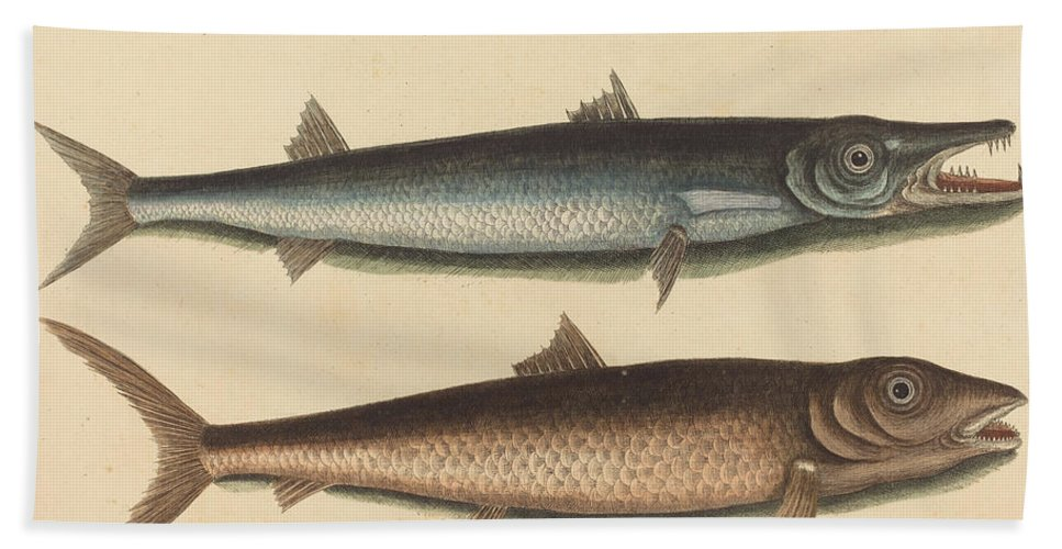 Hand Towel featuring the drawing The Barracuda (esox Barracuda) by Mark Catesby