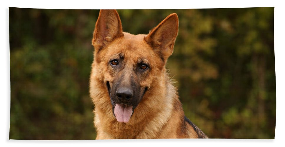 German Shepherd Dog Hand Towel featuring the photograph The Beautiful Kelly by Sandy Keeton