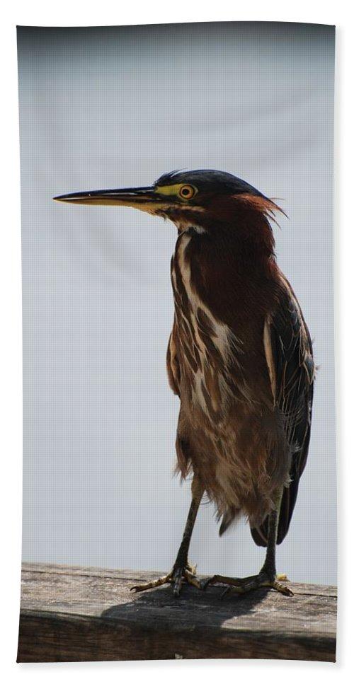 Birds Bath Towel featuring the photograph The Bird by Rob Hans