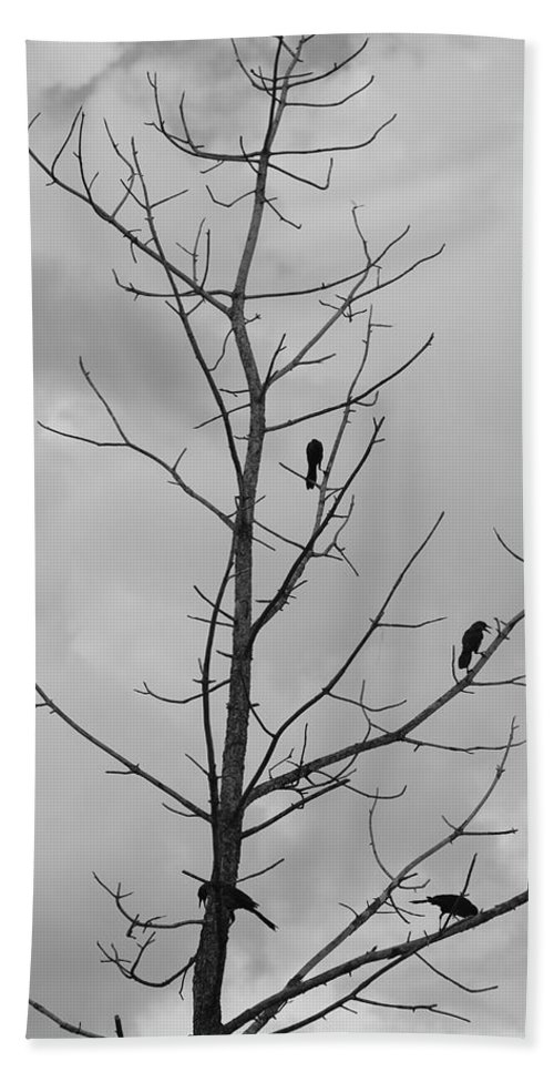 Tree Bath Towel featuring the photograph The Birds by Rob Hans