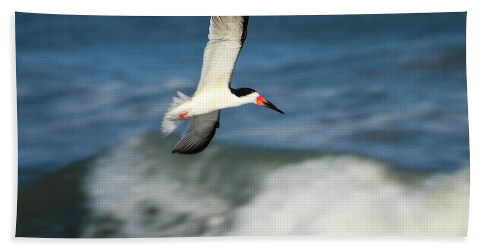 Birds Of Ocracoke Bath Sheet featuring the photograph The Black Skimmer by Debbie Morris