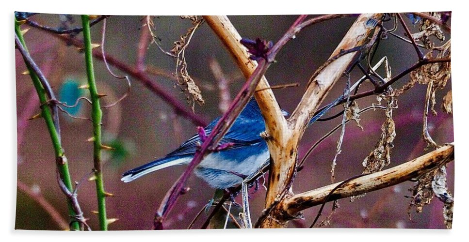 Bird Bath Sheet featuring the photograph The Blue Of Winter In The Woods by Shawn M Greener