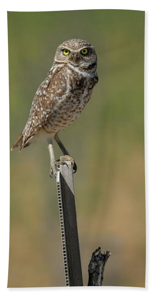 Burrowing Owl Bath Sheet featuring the photograph The Burrowing Owl by Steve McKinzie