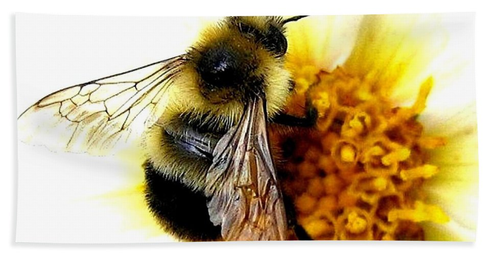 Honeybee Bath Towel featuring the photograph The Buzz by Will Borden