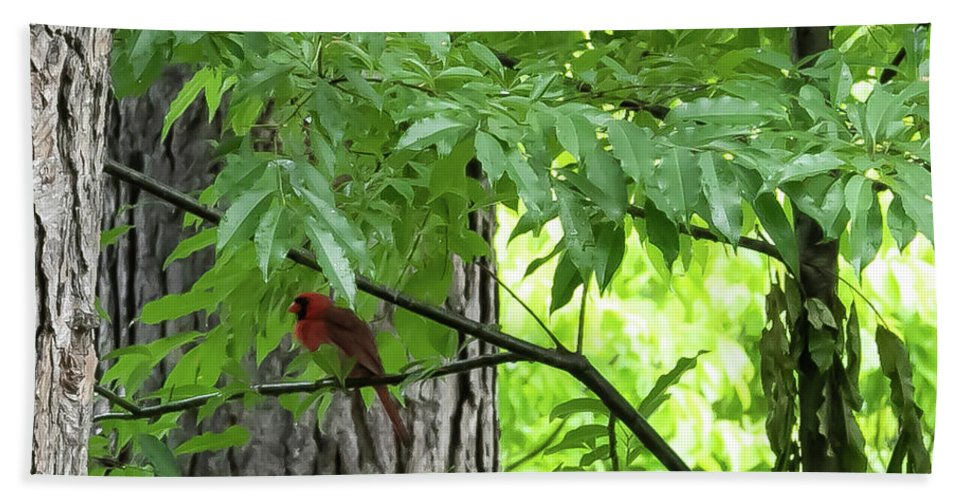 Bird Bath Towel featuring the digital art The Cardinal In The Woods by Ed Stines
