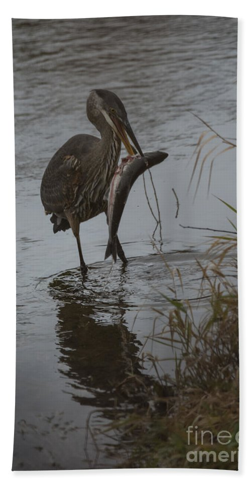 Heron Bath Sheet featuring the photograph The Catch by Rod Wiens