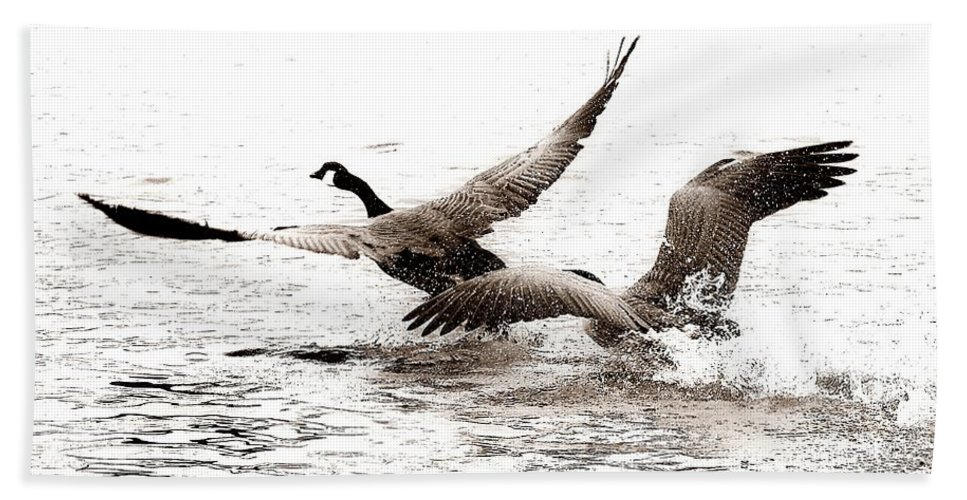 Birds Bath Sheet featuring the photograph The Chase by Angie Tirado
