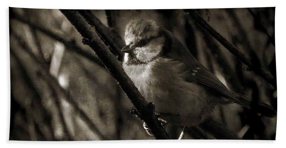Blue Tit Bath Sheet featuring the photograph The Cold Morning by Angel Ciesniarska