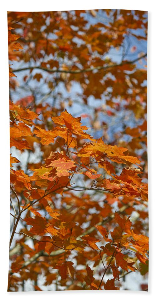 Fall Hand Towel featuring the photograph The Color Of Fall 1 by Teresa Mucha