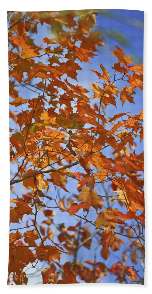 Fall Hand Towel featuring the photograph The Color Of Fall 2 by Teresa Mucha