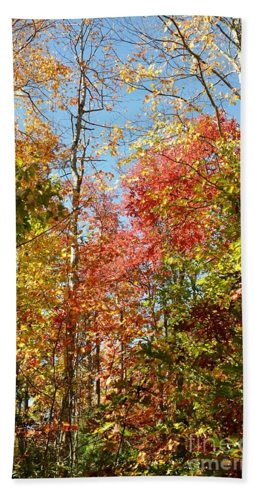 Leaves Hand Towel featuring the photograph The Colors Of Autumn by Christina McKinney