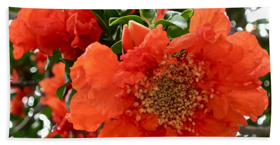 Orange Flower Hand Towel featuring the photograph The Colour Orange by Gwyn Newcombe