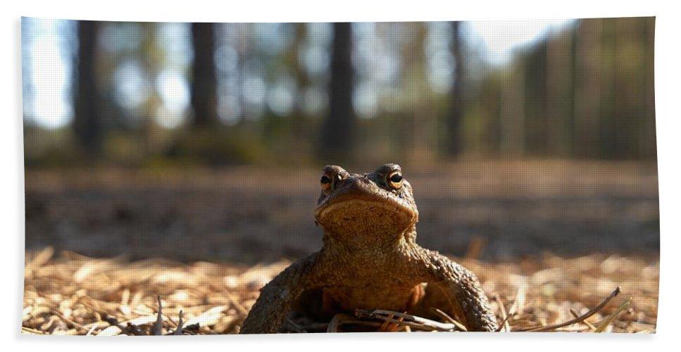 Seitseminen Hand Towel featuring the photograph The Common Toad 3 by Jouko Lehto