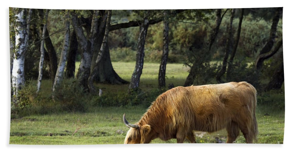 Heilan Coo Bath Towel featuring the photograph The Creature Of New Forest by Angel Tarantella