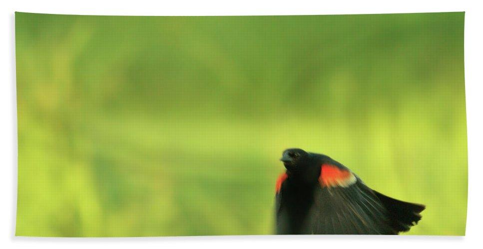 Bird Photographs Bath Sheet featuring the photograph The Dancer by Aimelle