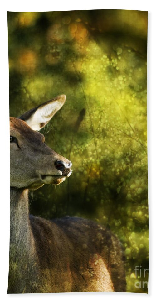 Deer Hand Towel featuring the photograph The Deer by Angel Ciesniarska