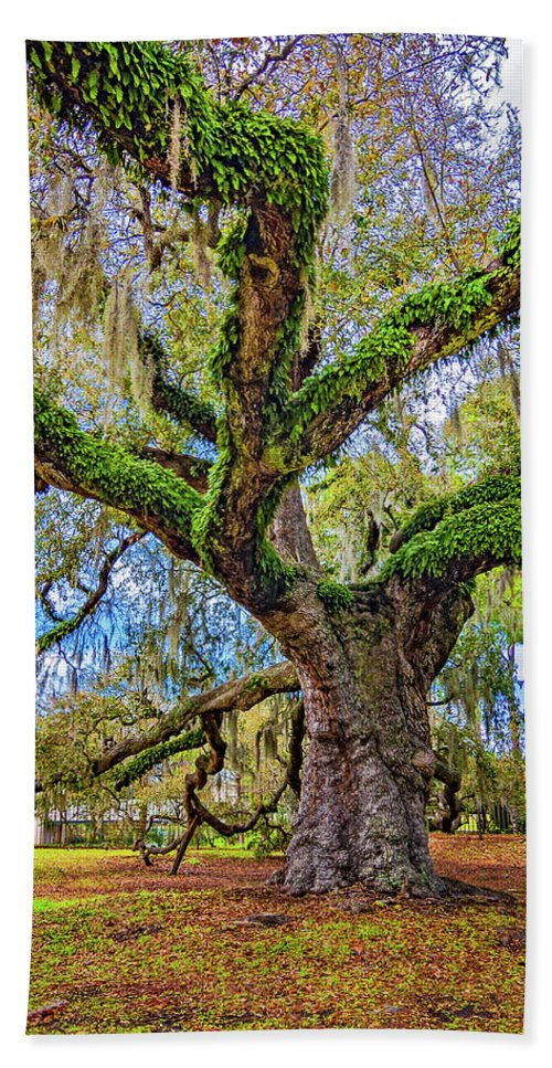 New Orleans Bath Sheet featuring the photograph The Dueling Oak 2 by Steve Harrington