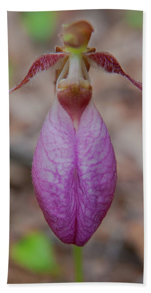 Flowers Hand Towel featuring the photograph The Ever So Rare Ladyslipper by Brenda Jacobs
