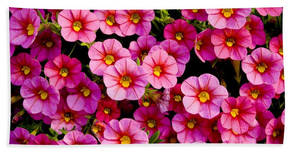 Flowers Bath Sheet featuring the photograph The Eyes by Greg Fortier