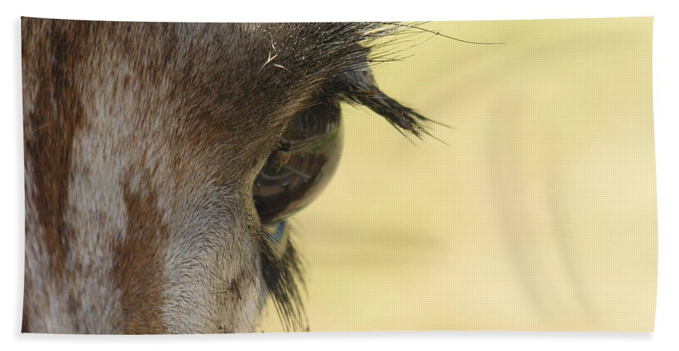 Giraffe Hand Towel featuring the photograph The Eyes Have It by Diane Greco-Lesser