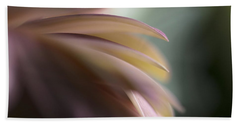 2015 Hand Towel featuring the photograph The Feathery Kisses In My Dreams by Sandra Parlow