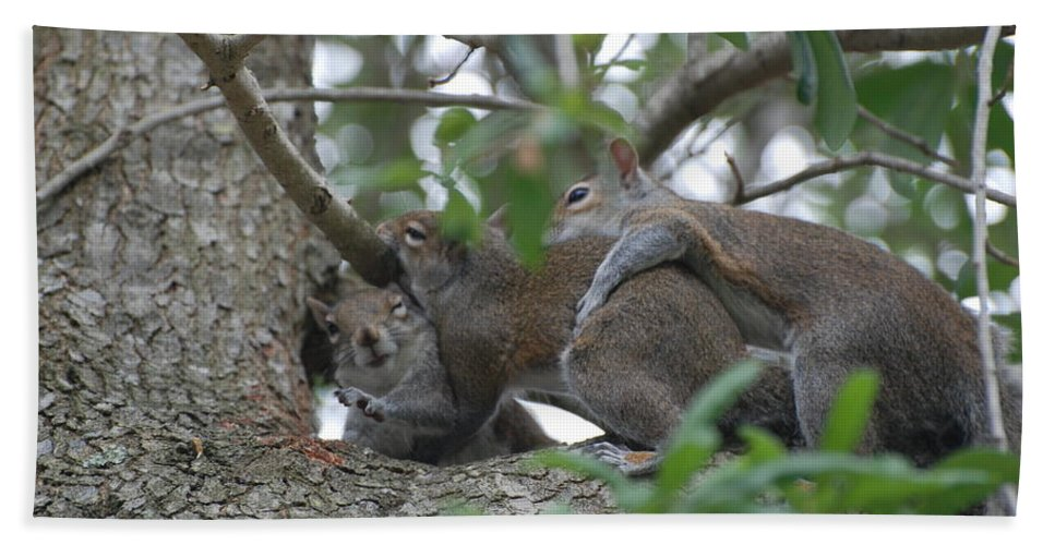 Squirrels Bath Sheet featuring the photograph The Fight For Life by Rob Hans