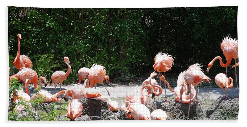 Animal Bath Sheet featuring the photograph The Flamingos by Rob Hans