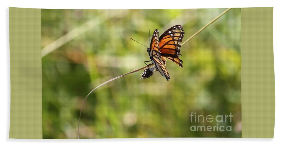 Monarch Butterfly Nautre Bath Sheet featuring the photograph The Flutterby by Katherine Ruth