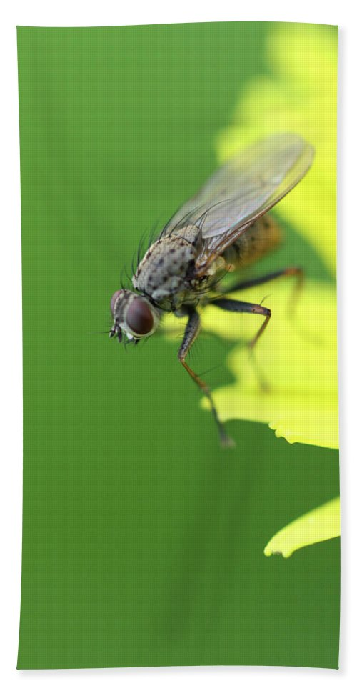 Flies Hand Towel featuring the photograph The Fly by Danielle Silveira
