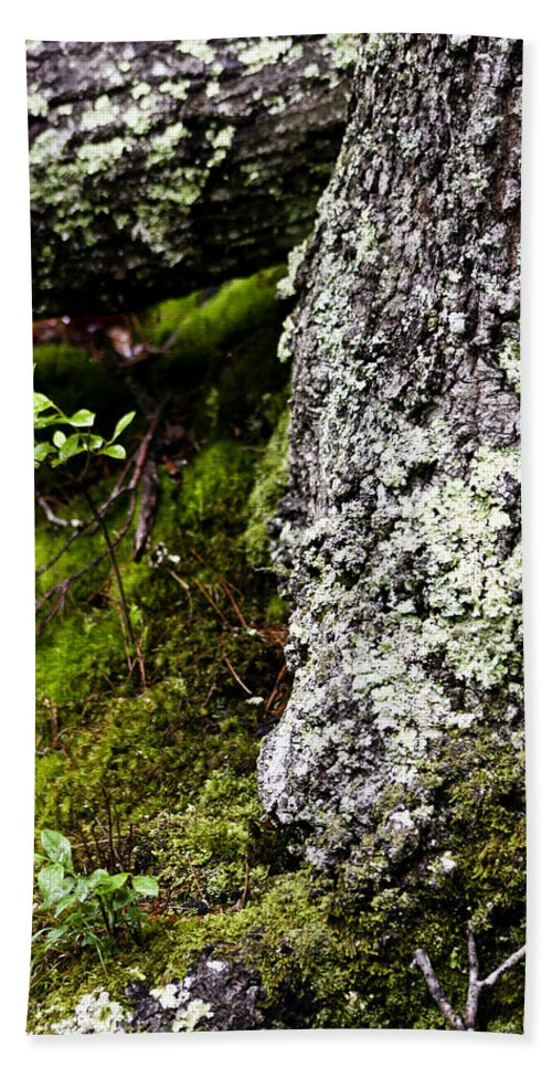 Moss Bath Towel featuring the photograph The Forest Floor Bluestone State Park West Virginia by Teresa Mucha