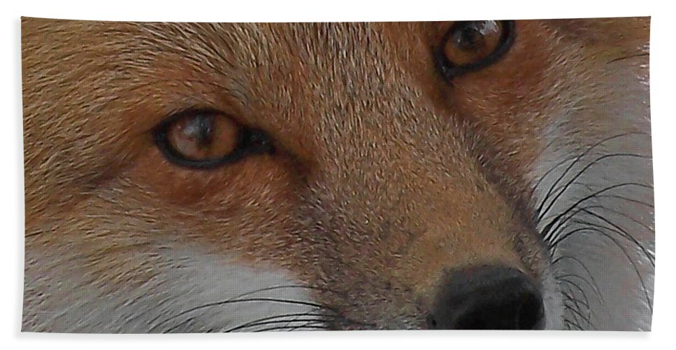 Red Fox Bath Sheet featuring the photograph The Fox 4 Upclose by Ernie Echols