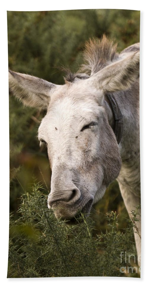 Donkey Hand Towel featuring the photograph the Funny Donkey by Angel Ciesniarska