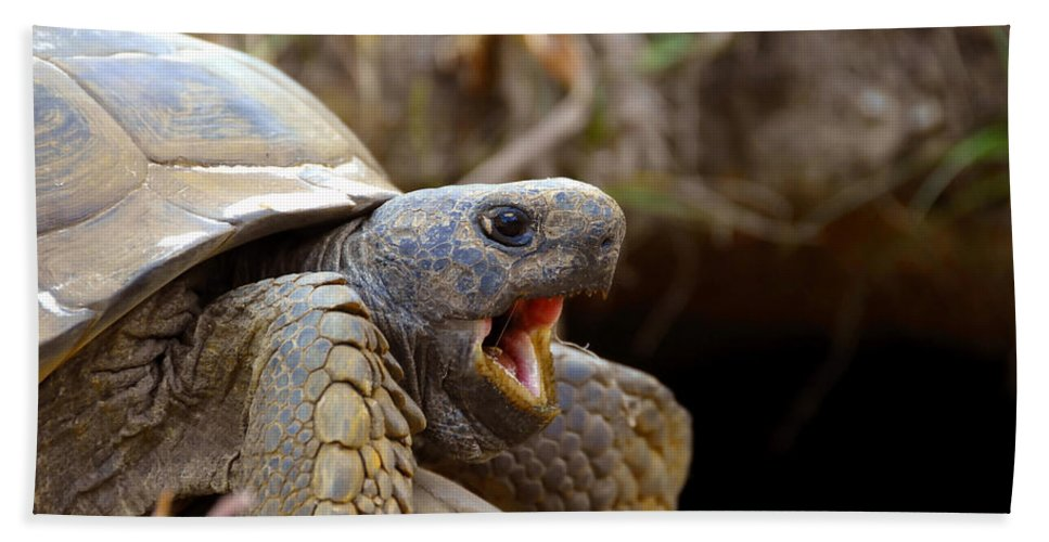 Gopher Tortoise Hand Towel featuring the photograph The Great Gopher Tortoise by David Lee Thompson