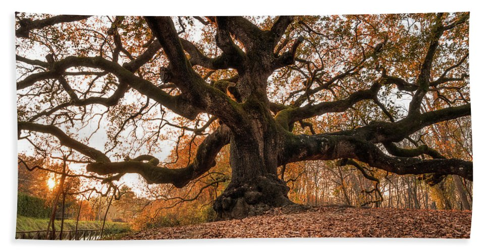 Great Bath Sheet featuring the photograph The Great Oak by Matteo Viviani