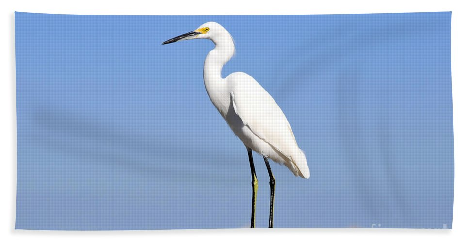 Great Snowy Egret Bath Towel featuring the photograph The Great Snowy Egret by David Lee Thompson