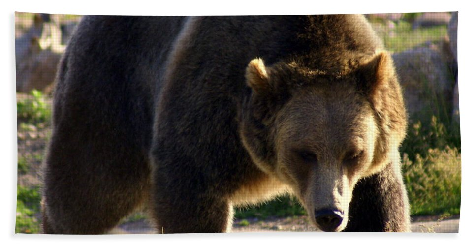 Grizzly Bear Hand Towel featuring the photograph The Grizz by Marty Koch