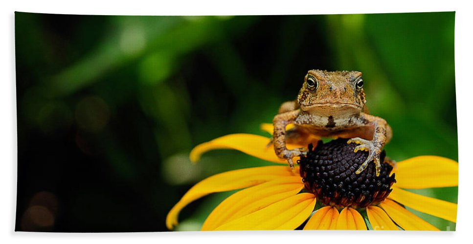 Toad Bath Towel featuring the photograph The Harbinger by Lois Bryan