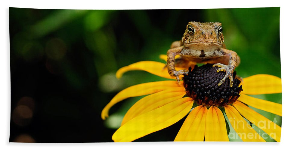 Toad Hand Towel featuring the photograph The Harbinger by Lois Bryan